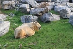 Petits de VIS : Souricette au zoo