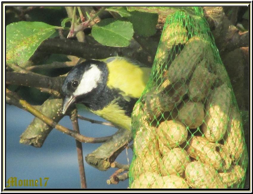 Le retour des oiseaux dans le jardin et un peu de tout