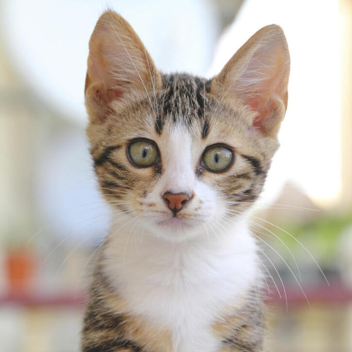 Articles sur les Chats 2:  5 faits inusités sur les chats