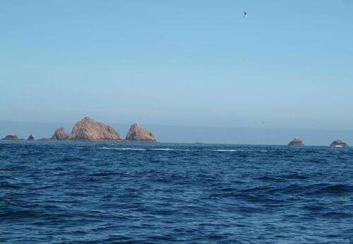 Péniche et l'île de Berlenga