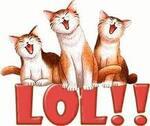 Dure vie de chat !!