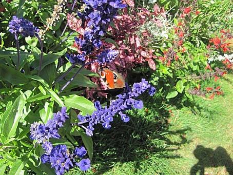 les-papillons-7588.JPG