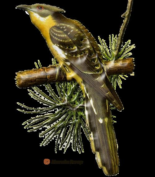 Tubes d'oiseaux en relief page 2