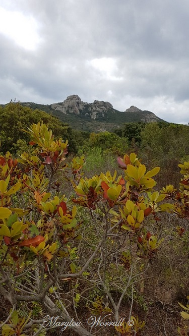 Corse : Plateau de Cauria 2/2