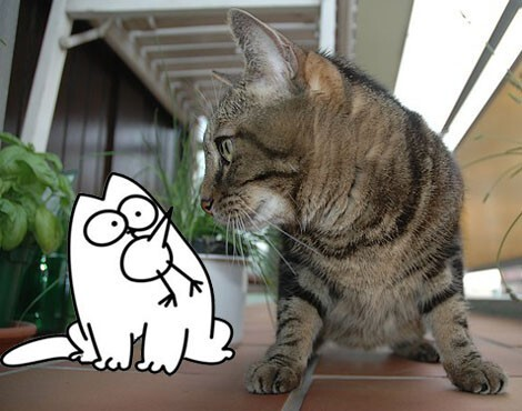 Montage photos Bubulle Simon's cat