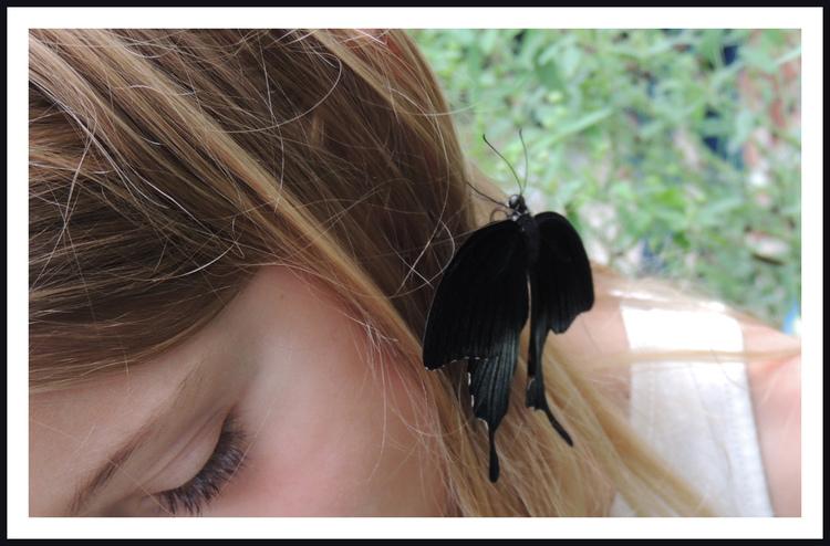 Papillons exotiques.(2).Amérique du Sud.Images gratuites.Par Jipé