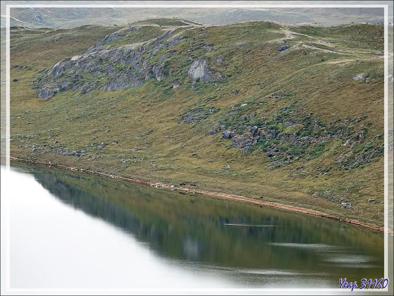 Paysage de toundra et bœufs musqués en bordure du lac Qaarsorsuaq - Kangerlussuaq - Groenland