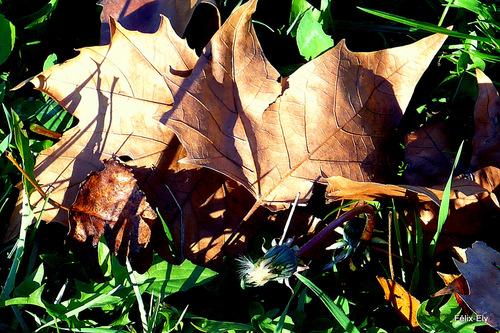 Des feuilles en automne ...