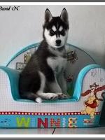 Naïka (2 mois)