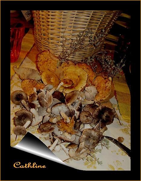 cueillet-champignons-du-26-novembre-2011.jpg