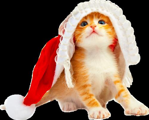 Animaux de Noël Série 9