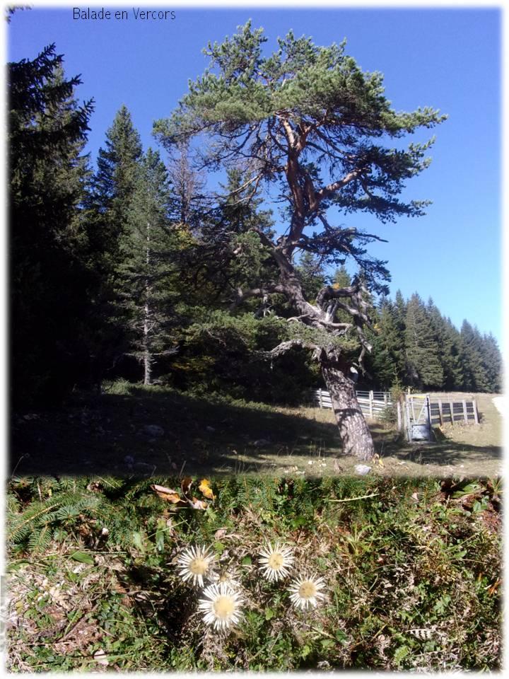 """Balade """"route forestière les Allières"""" en Vercors"""