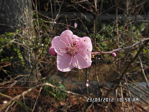 23-Mars-2012-005.JPG