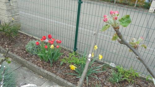 Balade dans mon jardin