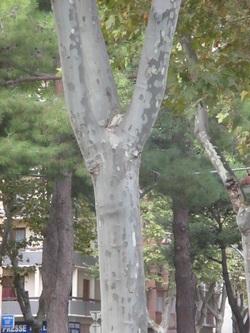 Sur le  boulevard, les feuilles tombent