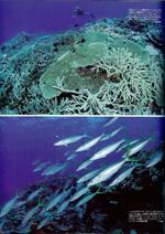 Marine Diving - マリンダイビング - Cliquer pour agrandir
