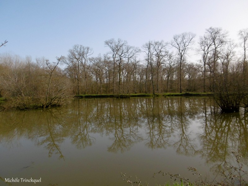 Une balade aux Etangs des Gravières à DAX (40), le 3 février (suite n° 2 et fin)...