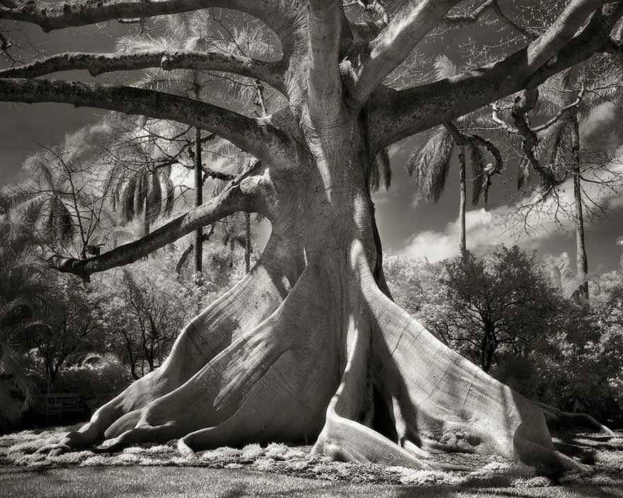 Une photographe remarquable : Beth Moon