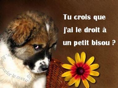 Tu crois que j'ai le droit à un petit bisou ? #bisous chiens mignon