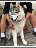 Laïcko (8,5 mois)