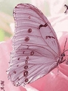 papillon rose 2