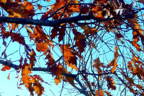 Des feuilles ...