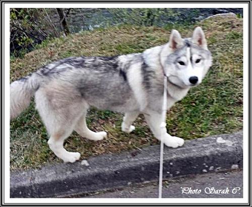 Iankee (6 mois)