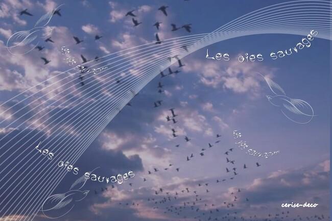 design vol d'oiseaux