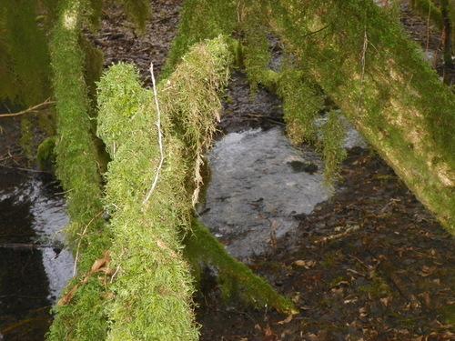 La forêt d'Andert-et-Condon