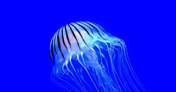 Hommage à la mer... *3... les méduses