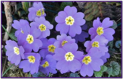 Les fleurs du jardin 2014