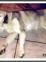 Leska (9 mois)
