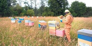 Les abeilles sont notre survie ...