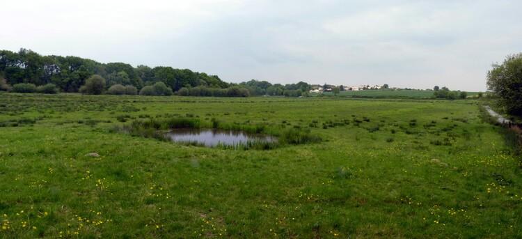 Marais de l'Acheneau