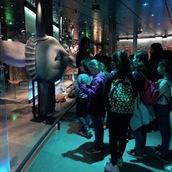 Une agréable journée au Muséum national d'Histoire naturelle avec les cm1 c !