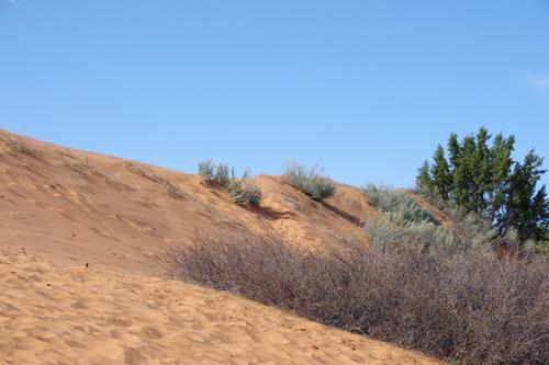 Coral Pink Sand Dunes et Glen Canyon
