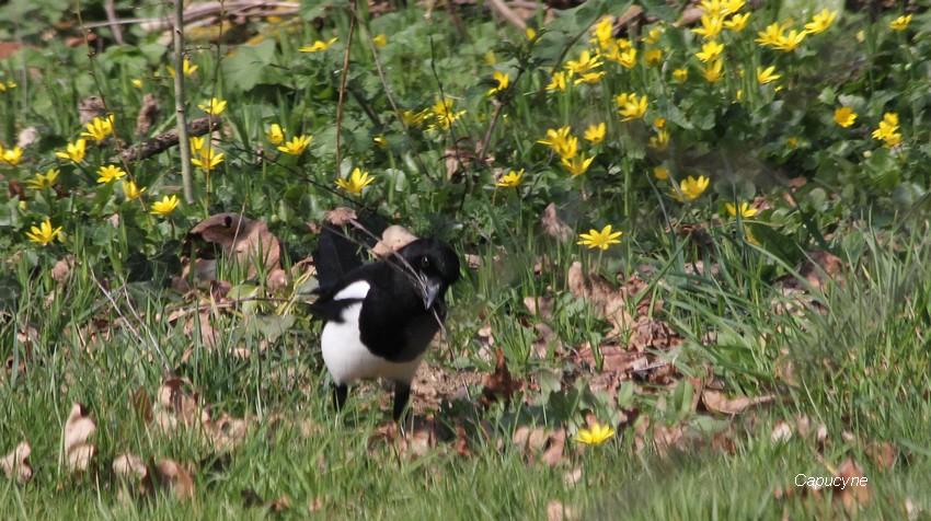 Les oiseaux du jardin en mars...en direct de l'éclipse !