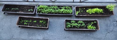 Mes plantations et semis ...