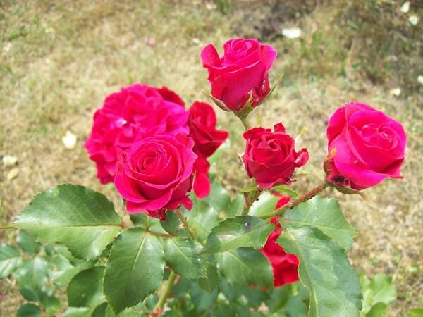 SAL La vie en rose – 2