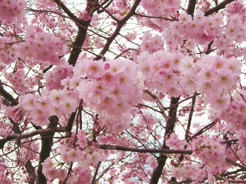C 39 est le printemps par del les chemins contextuels for Semer le gazon au printemps
