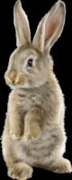 *** Keeping Bunny Warm ***