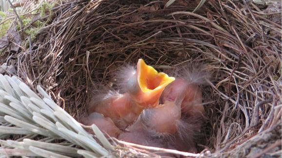 """Résultat de recherche d'images pour """"nid"""""""