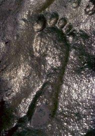 Pétrifié empreinte dans les couches du Permien