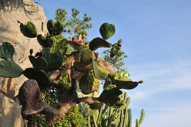 Monaco, le Jardin exotique