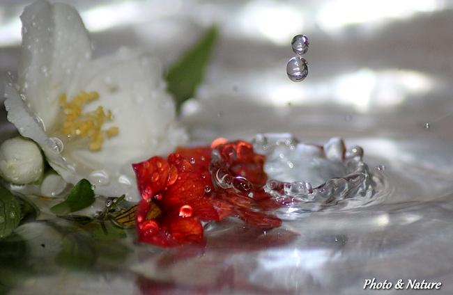 Des gouttes et des fleurs