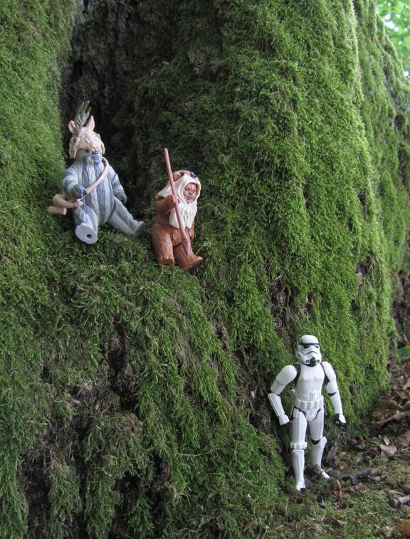 Ewoks en ambuscade