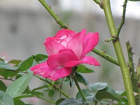 fleurs-6602.JPG
