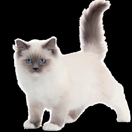 Tubes chats blanc
