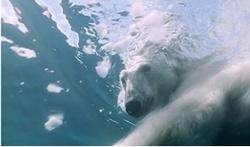 Voyage au coeur des glaces (source)