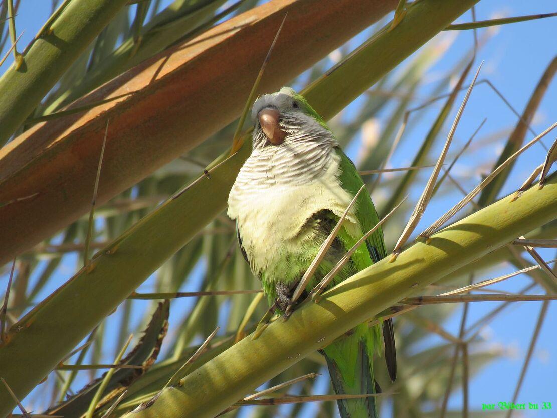 des oiseaux en Espagne